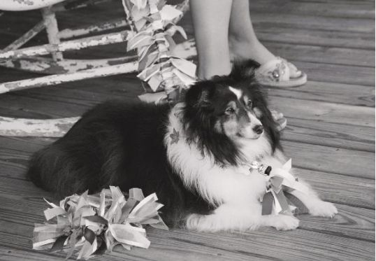dress up your dog for your wedding with a stylish leash